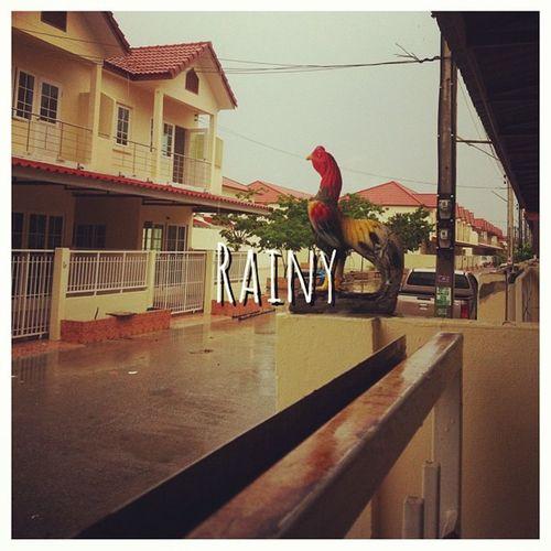ฝนตก ยิ่งนึกถึงทีไร ก็ยิ่งชุ่มฉ่ำ อุ่นในหัวใจ Rainy ฤดูฝน ถดูที่ฉันเหงา ฝนตกเหมือนไหม เหงาเนาะ