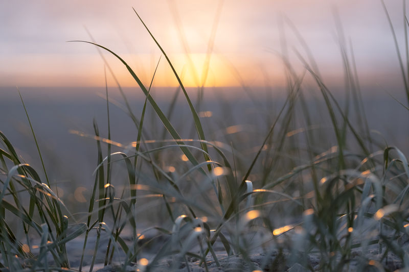 Sunset in the dunes. Dunes Sunset_collection Beauty In Nature Blade Of Grass Close-up Field Focus On Foreground Grass Growth Land Nature No People North Sea Outdoors Plant Scenics - Nature Selective Focus Sky Sunlight Sunset Tranquil Scene Tranquility Water