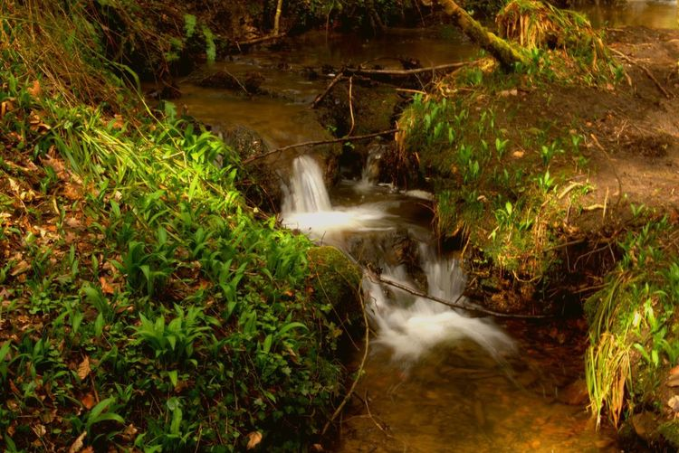 Damn Twig Water Motion Plant Waterfall Beauty In Nature Scenics - Nature Nature Forest Flowing Water Environment Tree Long Exposure Growth River Blurred Motion Green Color No People Flowing Outdoors