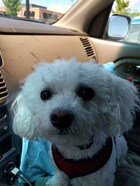 Traveling pooch Dog Traveller Pet Portraits