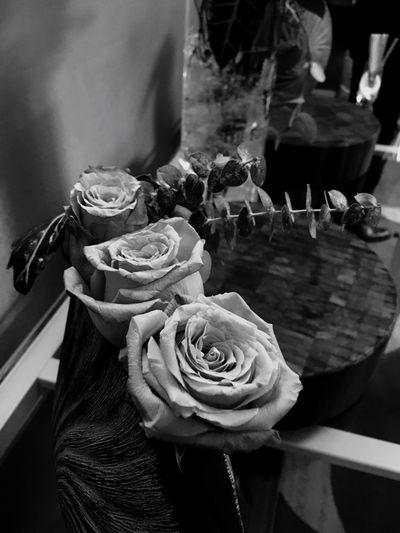 Black And White Friday Rose - Flower Nature