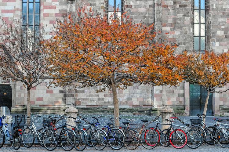 Fahrräder in Bozen Bolzano - Bozen City Life Colorful Nikon 24-70/2,8 Nikon D300s Trees Bycicles Colored Leafs Church Bozen Bolzano Autumn Leaves Laubfärbung Gettyimages Nikon Nikonphotography