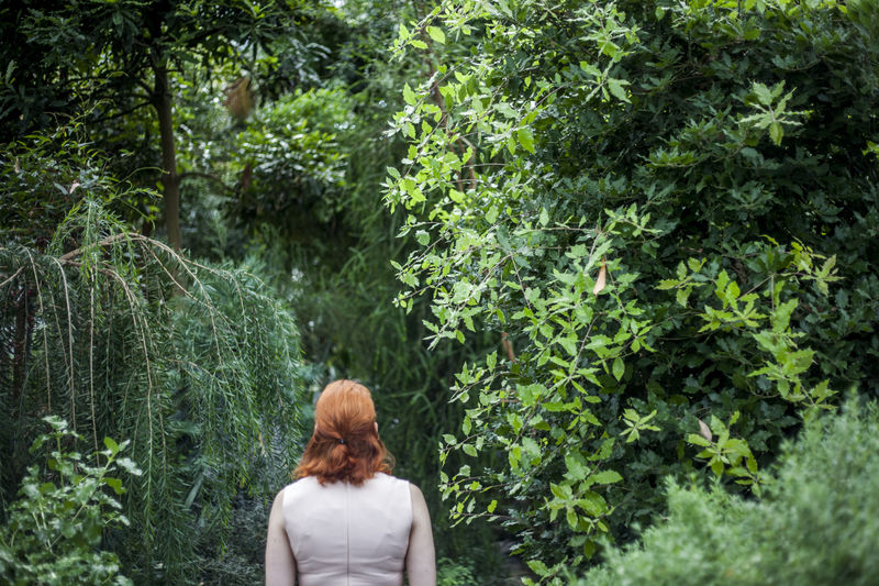 Rear View Of Redhead Woman Against Rainforest