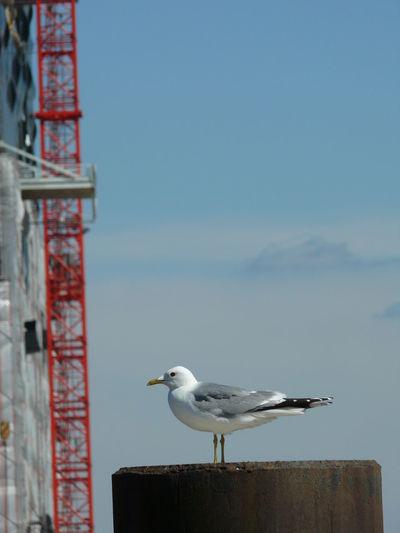 Architecture Architecture Building Crane Elbe River Front Hamburg Philharmonie Plastic Sheet Seagull