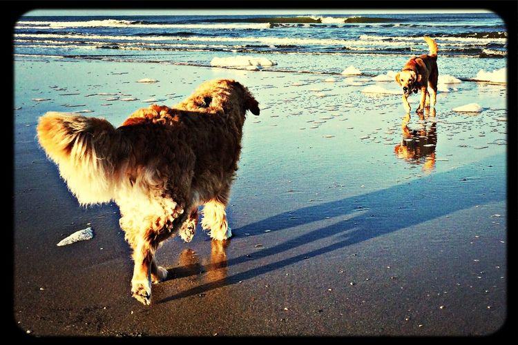Dogs@Beach.