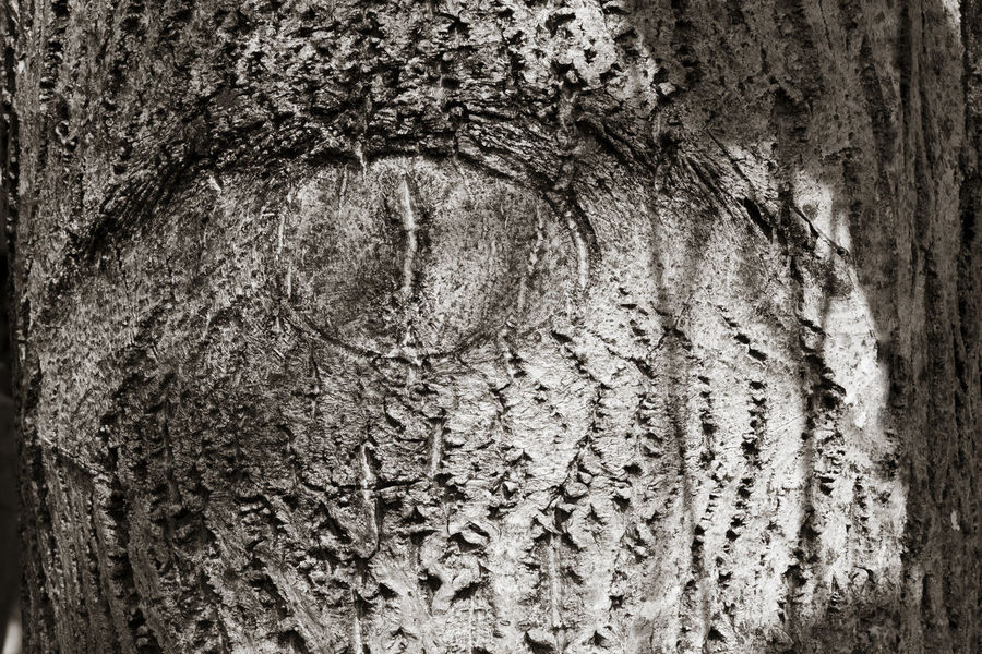 Abstract Bark Black And White Blackandwhite Close-up Eye Full Frame Getting Inspired Light And Shadow Monochrome Nature Noiretblanc Outdoors Rough Texture Textured  Tree Tree Trunk Wood - Material