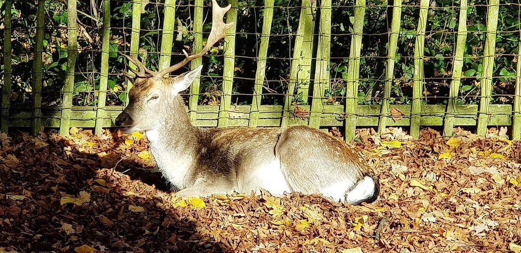 Walking Around Deer Deer ♥♥ Deer Sighting Sunrays Shadow Close-up