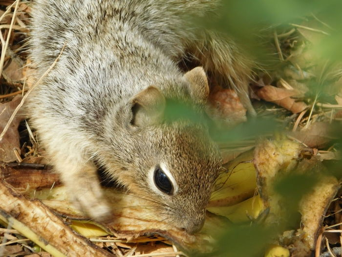 Arizona Grand Canyon Squirrel Animal Themes Animal Wildlife Animals In The Wild Outdoors Squirrels