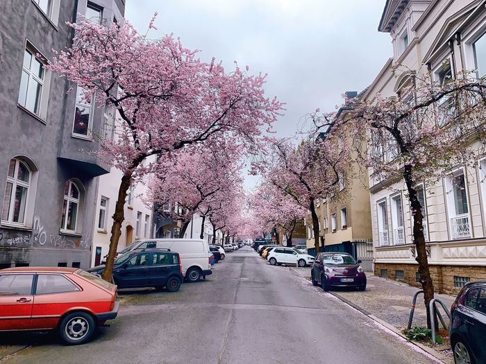 Kirschblüten. Photooftheday EyeEm Best Edits EyeEm Best Shots EyeEmBestPics EyeEm Gallery EyeEm Selects Naturelovers Nature_collection Capture Check This Out Streetphotography Blossom Cherry Blossom Car Motor Vehicle Building Exterior Mode Of Transportation Built Structure Architecture Land Vehicle Sky City Day Tree Nature Building Street The Way Forward Road Cloud - Sky