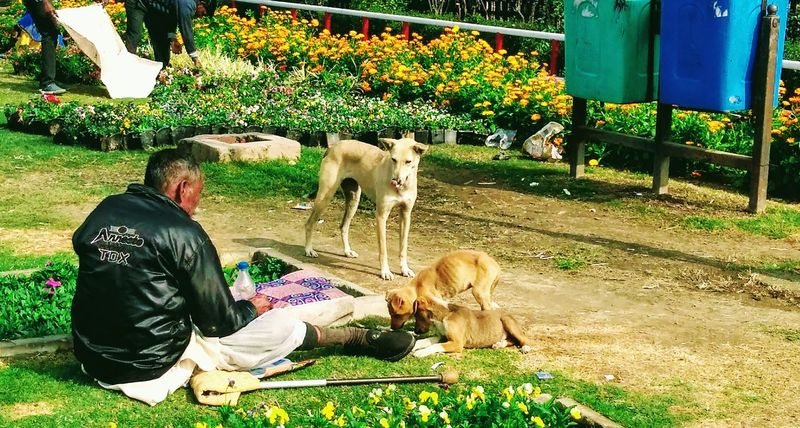 Straydogs Motherly Love Hunger Poorman Sharing Food Adapted To The City