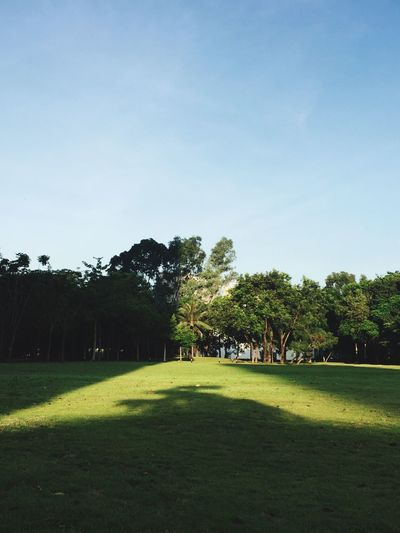 Tree Grass Nature Landscape Green Color Growth Beauty In Nature Field Playing Tranquility Sport Sky Clear Sky Men Outdoors People Day IPhoneography Morning