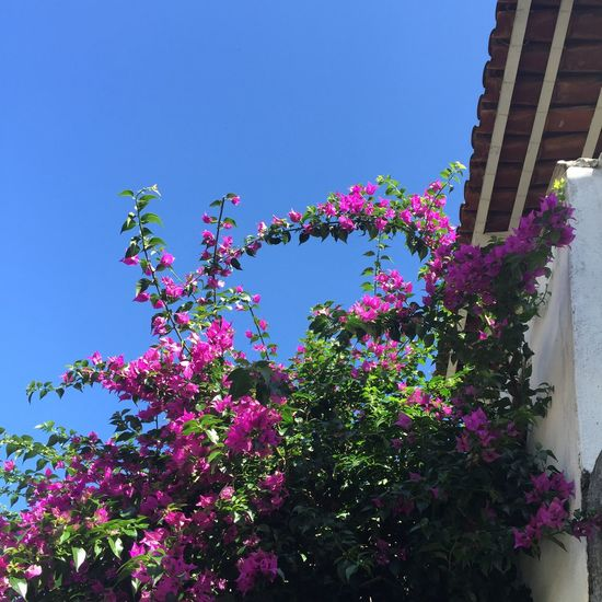 Yeah Springtime! Flores Flowers Blue Sky