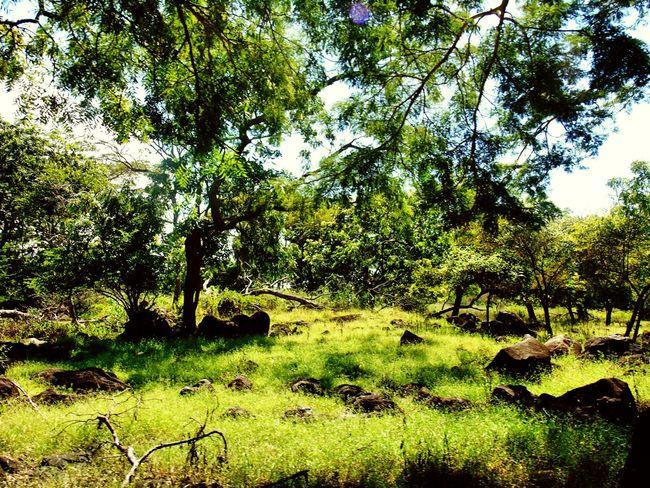 Tamannasionalbaluran View Forest INDONESIA