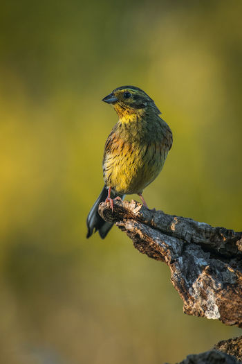 Bird Vertebrate Animal Themes Animal Wildlife Animals In The Wild Perching One Animal Animal Focus On Foreground Day No People Close-up Looking Away Nature Outdoors Yellow Looking Branch Tree Plant