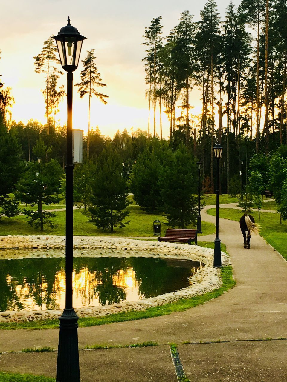 tree, plant, sky, nature, sunset, grass, park, real people, water, footpath, growth, lighting equipment, beauty in nature, park - man made space, outdoors, day, men, lake, street light