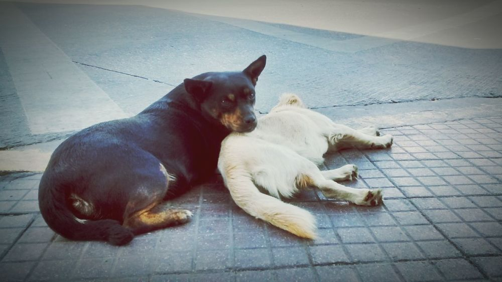 Dogslife Animal_collection Animal Love Partners Streetlife Abandoned