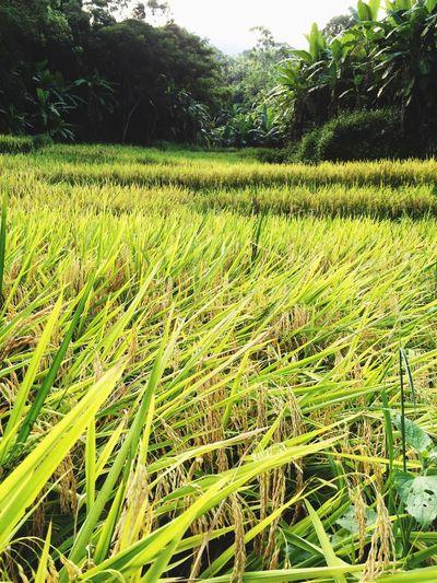 农民的原生态环境与自然系统