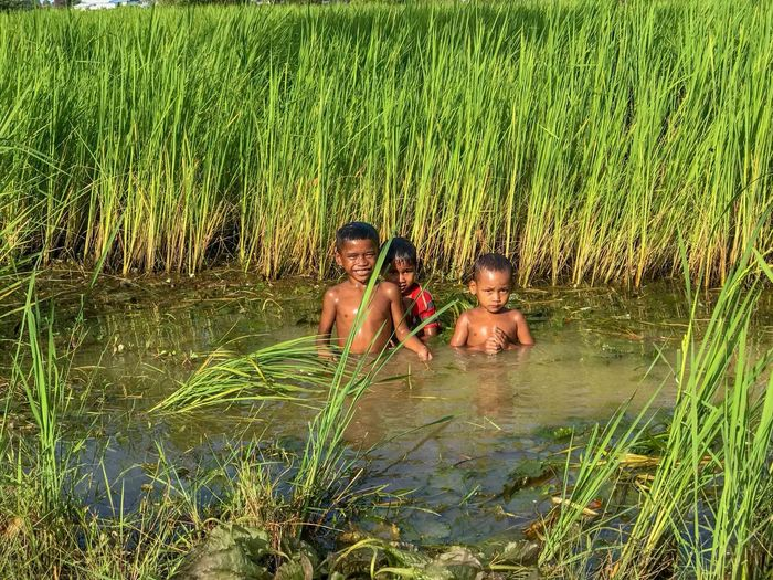 Children playing in a flooded rice field Swimming Boys Child Childhood Lake Outdoors Plant Water