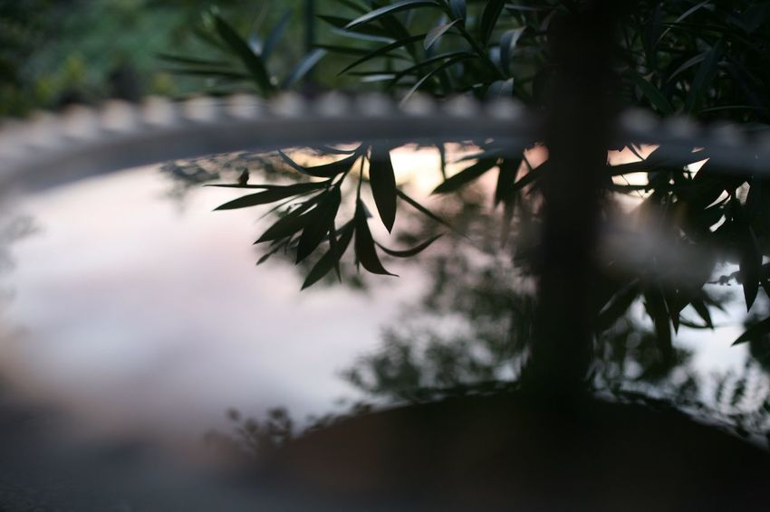 🌳Garden🌿 Reflect Reflection Mirror Herb Plant Garden Photography Garden Light Plant Growth No People Nature Tree Beauty In Nature Selective Focus Close-up Day Plant Part Leaf Focus On Foreground Tranquility Branch Outdoors Water Coniferous Tree Green Color Silhouette Sunlight