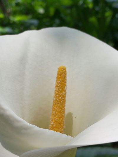 Nature Plants On The Wall No People Beauty In Nature Nature Flower Head Garden White Flower Stamen Close-up In Bloom