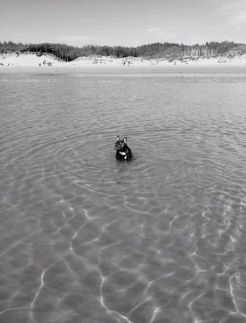 Newborough Beach Frenchbulldog Nature