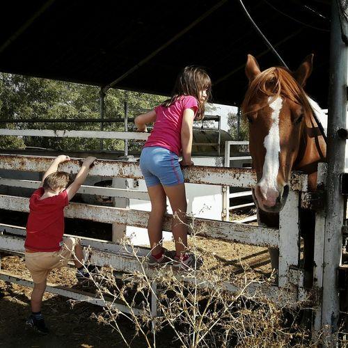 Rear View Of Siblings Playing At Ranch