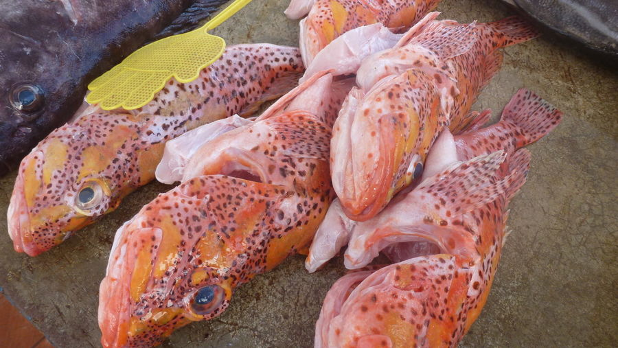 Fresh fish on