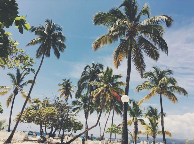 Palm Tree Growth Tree Nature Beauty In Nature No People Sky Day Low Angle View Outdoors Scenics Nature Bacardi Island Beachphotography Outdoor