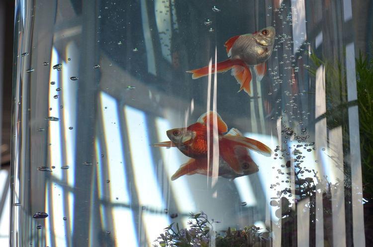 金魚 Goldfish Reflections Windows Tokyo Sky Tree Observatory Hello World Relaxing Relaxing Moments Enjoying Life Capture The Moment Getting Inspired Multiple Layers Learn & Shoot: Layering EyeEm Best Shots at 東京スカイツリー Tokyoskytree Tokyo,Japan