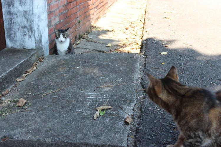 光復新村探訪貓蹤 遇見的貓咪狀況看起來都不錯 彼此之前還能夠對話 稍微靠近也不會馬上逃開,偶爾還會跑過來撒嬌 而且眷村好美,多希望能夠搬來住 The View And The Spirit Of Taiwan 台灣景 台灣情 Animal Themes Architecture Cat Cats City Domestic Domestic Animals Domestic Cat Feline Landscapes Mammal Nature One Animal Outdoors Pets Travel Destinations