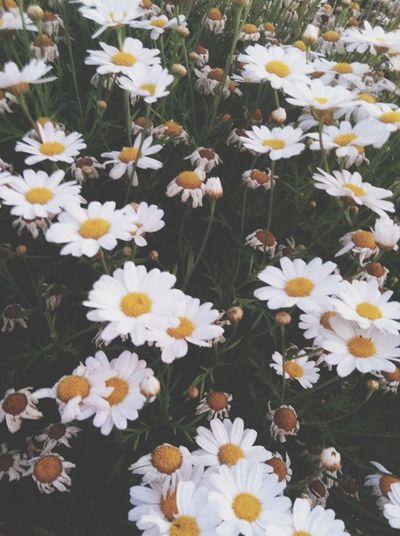 Daisy?