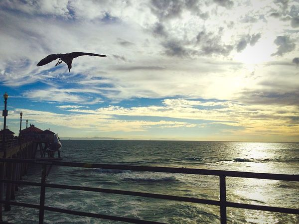 Birds Freedom Waves, Ocean, Nature Sunset Lovers Nature_collection Ocean View Be Happy Taking Photos Magic Color EndlessLove Life In Colors Clouds And Sky Aroundtheworld Capture The Moment Beachphotography Amazing View California Roadtrip Traveling Hi! Magic Moments