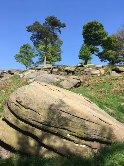 Cloudless skies over Longshaw Cloudless Blue Sky Longshaw Estate Derbyshire Uk Gritstone Plant Tree Sky Nature Growth No People Land Day Beauty In Nature Sunlight Outdoors Tranquility Environment Tranquil Scene Green Color Blue Scenics - Nature Clear Sky Field Landscape