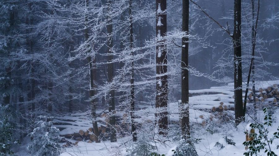 Nature Winter Cold Temperature Snow Tree Nature Forest Frozen Outdoors Tranquility Plant Timber Logs Snowed Under Shades Of Winter
