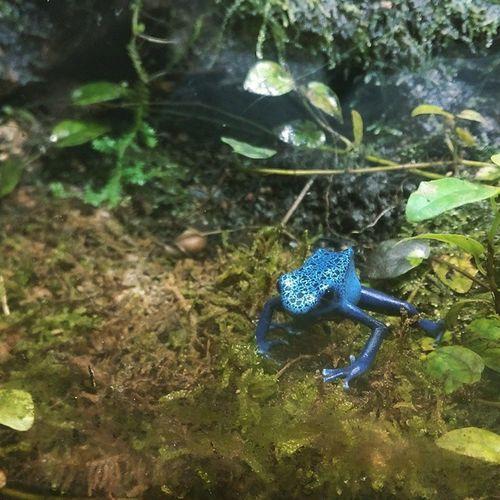 Frog Oceanpark HongKong Oceanparkhk Nature Blue Hop