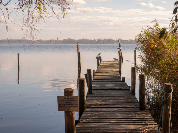 Pier in Altwarp Water Wood - Material Sky Nature The Way Forward Tranquility Pier Sea Tranquil Scene No People Scenics - Nature Direction Post Tree Plant Beauty In Nature Wooden Post Day Outdoors Wood Paneling Wood Long Baltic Sea Stettiner Haff Ueckermünde