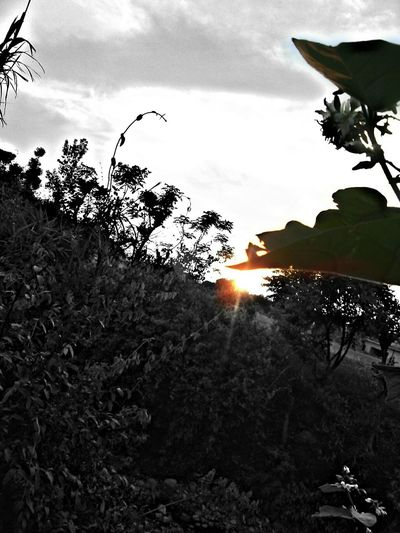 Photography Sunrise Green Leaves First Eyeem Photo Black And White Black And White With Yellow Sun