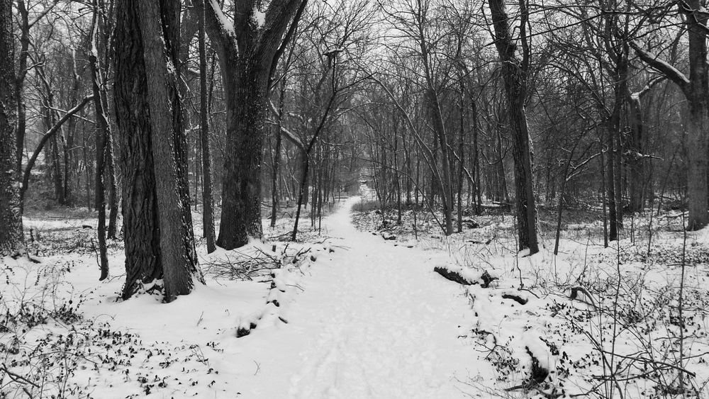 Lexington Kentucky  United States Forest Snow Winter Tree Nature Cold Temperature Trail Path Way Forward Beauty In Nature WoodLand Tranquility Outdoors Tree Trunk Landscape Scenics Bare Tree Day No People