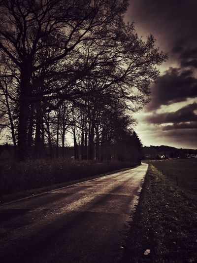 Lonely winter road Grey Sky Contrast Winter Moody Tree Road Sky Nature Cloud - Sky Silhouette Diminishing Perspective