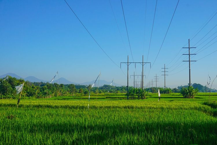 rice paddy Technology Bird Electricity Pylon Electricity  Fuel And Power Generation Cable Agriculture Rural Scene Power Supply Rice Paddy Terraced Field Field A New Beginning EyeEmNewHere