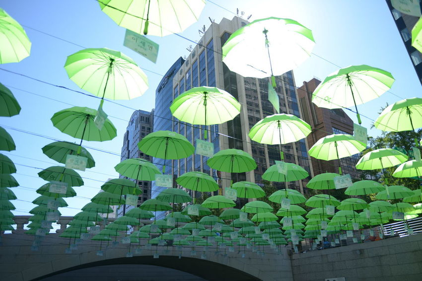 Low Angle View Umbrella Sky Nature Built Structure Day Architecture No People Sunlight Hanging Decoration Building Exterior Protection Parasol Outdoors Dome Plant Pattern Clear Sky Security Umbrellas