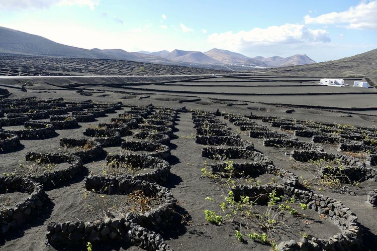 Typical vineyards at La Geria, Lanzarote Agriculture Beauty In Nature Landscape Mountain Mountain Range Remote Scenics - Nature Vineyard Volcanic Landscape