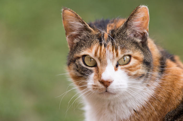 Stray Cat With Attitude Animal Themes Cat Cats Cat♡ Close-up Day Evil Feline Grassy Istanbul Looking At Camera Mammal No People One Animal Outdoors Portrait Sinister Skeptical Stray Cat Suspicious Wannabe Wannabe Lion Whisker Whiskers