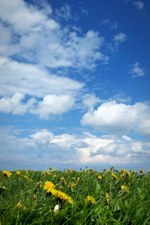 Clouds And Sky Clouds Colours Of Nature Lauwersmeer Wadden Sea Grass Flowers Hiking Seaside