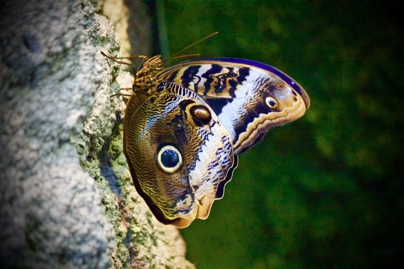 Animal Themes Blijdorp Butterfly Close-up Day Insect Nature No People One Animal Outdoors Reptile Water
