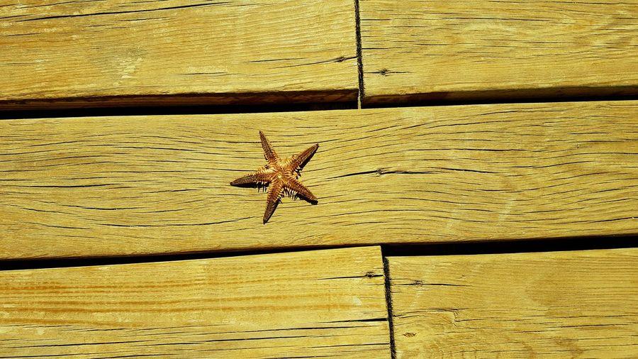 Starfish  Brown Wood Wood Floor Small Teeth Beach Drastic Edit Ses Life Live For The Story Summer Exploratorium Visual Creativity The Still Life Photographer - 2018 EyeEm Awards The Traveler - 2018 EyeEm Awards