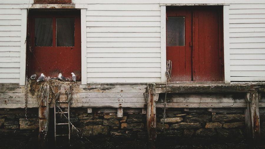 Seagulls Perching On Old Window