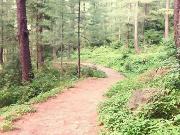 beautiful track in my village Relaxing Taking Photos