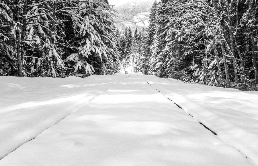 #B&W #beautifulbc #supernaturalBC #traintracksinthesnow Beauty In Nature Cold Temperature Day Field Frozen Landscape Nature No People Non-urban Scene Outdoors Powder Snow Scenics Sky Snow The Way Forward Tranquil Scene Tranquility Tree Weather White Color Winter