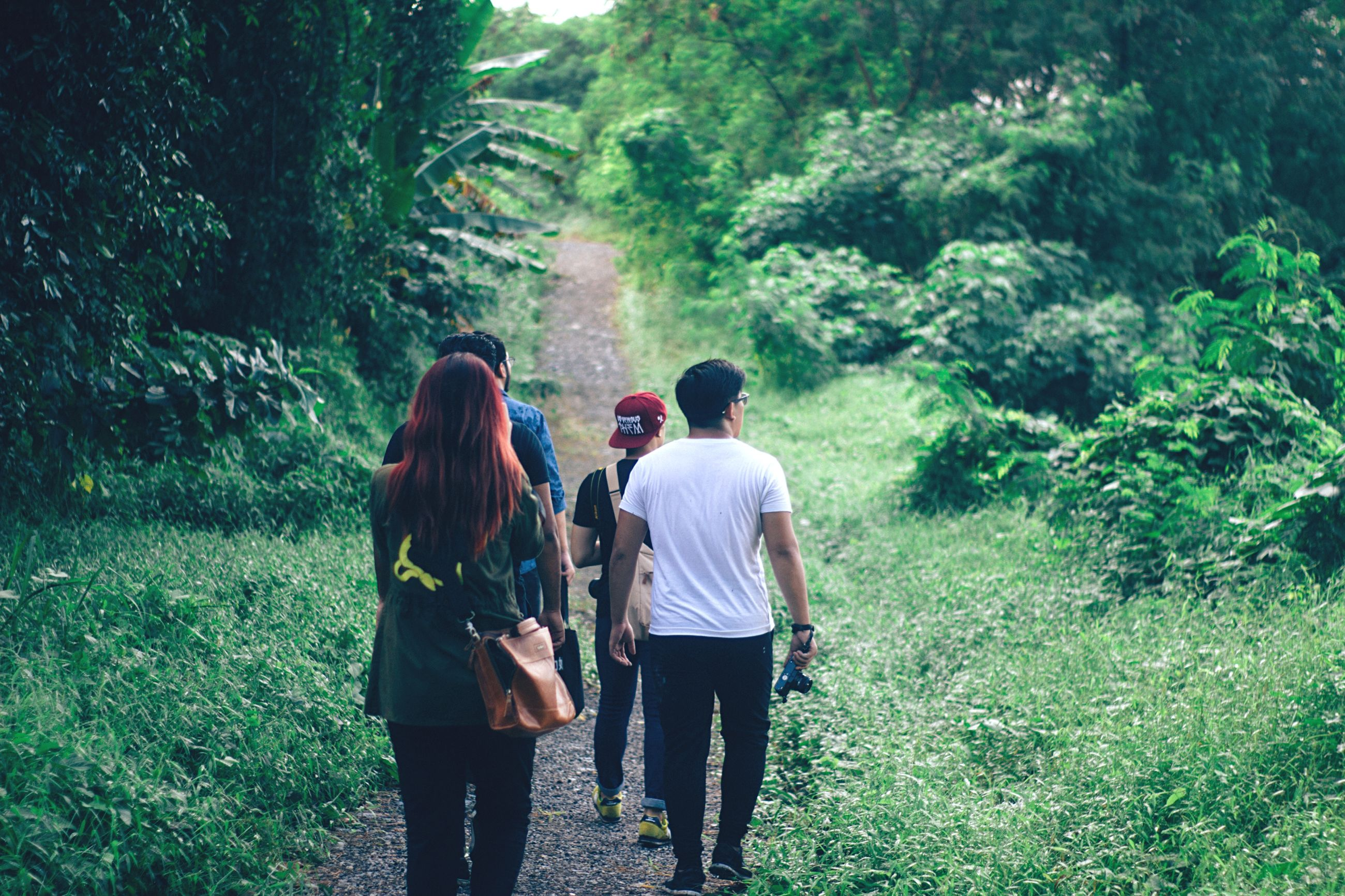 rear view, lifestyles, leisure activity, tree, togetherness, men, bonding, full length, casual clothing, love, person, friendship, walking, forest, nature, green color, standing